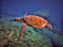 Banzai Divers Hawaii