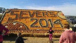 Sever's Corn Maze