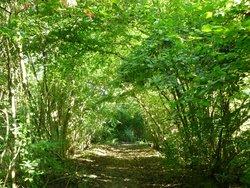 Réserve Naturelle de l'Ile du Rohrschollen