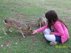 Tatu Carreta Zoologico