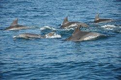 Dolphin Marine World