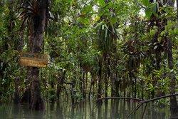 Coqui Mangrove Tour