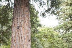 I loved the redwoods!