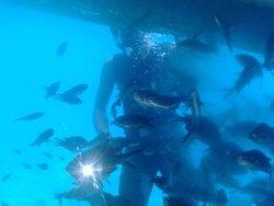 Submarine Tours