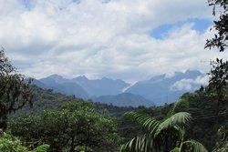 Bellavista Cloud Forest Reserve