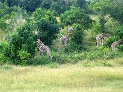 Parque Zoologico Nacional