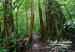 Curi Cancha Reserve