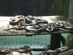 Bioparque Amazonia Safari