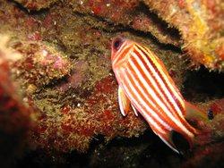 Deep Sea Diving Center