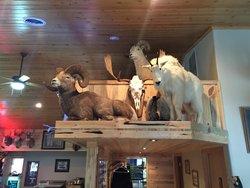 Wildlife mounts