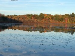 Hammond Pond Reservation