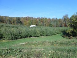 Stepp's Hillcrest Orchard
