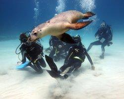 Diving Frontiers