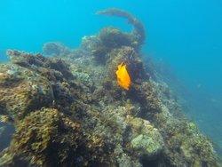 Sea Life Discovery Tours