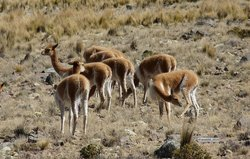 Reserva Nacional Pampa Galeras Barbara D'Achille