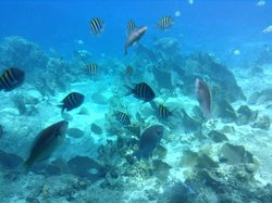Reef Explorer Semi Sub by Cozumel Tours
