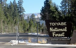 Toiyabe National Forest