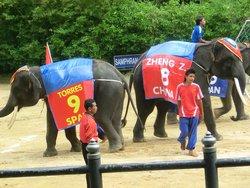Elephant Theme Show