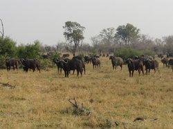 Odirile Safaris