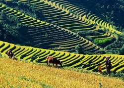 A Viet Tourism - Hanoi Villages Real Life Tour
