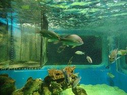 Ilha dos Aquarios