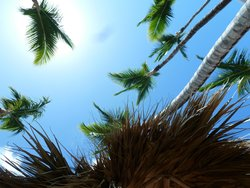 palms holding the sky