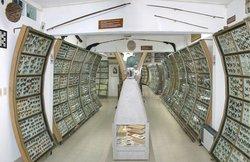 Museo Entomologico (Museum Entomologic) Mariposas del Mundo