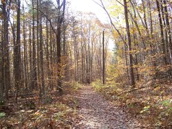 Pittsfield State Forest