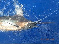 Lepika Sportfishing
