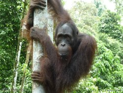 Top Peak Travel Borneo - Day Tours