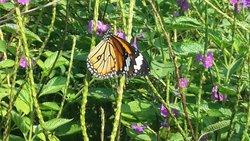 Butterfly park - Ovalekar Wadi