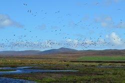 RSPB Loch Gruinart Reserve