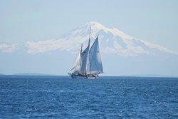 Schooner Zodiac - Day Cruise