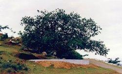 Vata Vriksha (Meditation Tree)