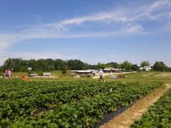 Waller Family Farm