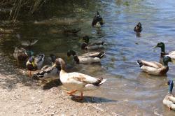 Beus Pond Park