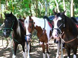 Painted Pony Horse Tours