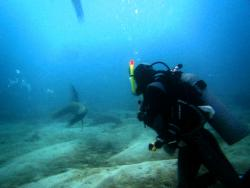 Galapagos Tip Top Dive & Training
