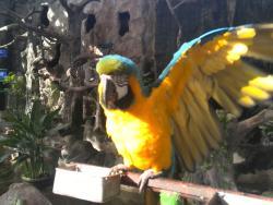 Pata Zoo