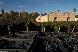 Casarena Bodega y Vinedos