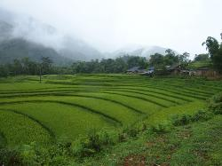 Terraced Rice Fields in Shin Chai Village