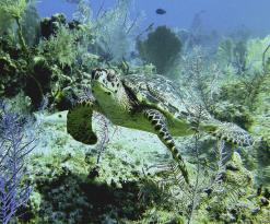 Reef Divers Cayman Islands