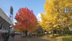Nishi Kyogoku Sports Complex