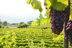Nice Wine Tours by Grape Tours