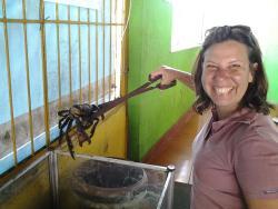 Caranguejo Manilha