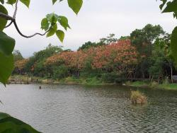 Luodong Forestry Culture Park
