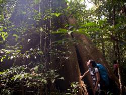 Big Tree Adventure Tours - Day Tours