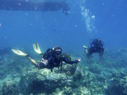 Ben Oa Plongee Guadeloupe