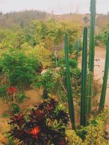 Jardin Suizo