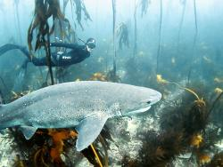Cape Town Freediving